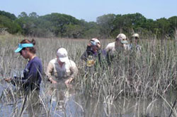 Exploring the marshes on Sapelo Island