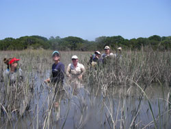 Exploring the marsh on Sapelo Island
