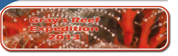 Gray's Reef Expedition 2013